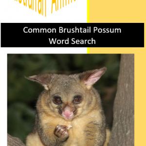 Common Brushtail Possum Word Search