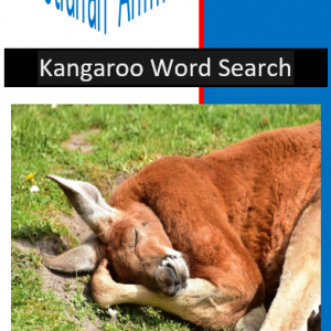 Kangaroo Word Search
