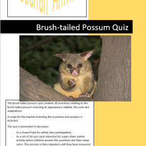 Brush-tailed possum quiz