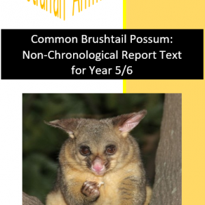 Common Brushtail Possum Text