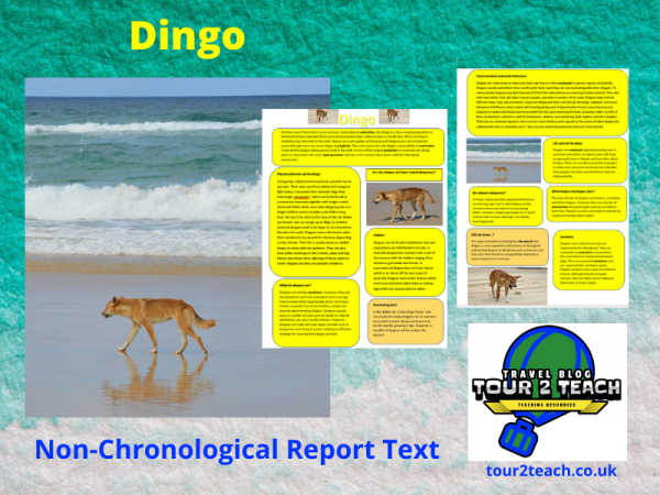 Dingo report text cover