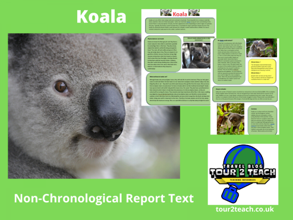 Koala word search cover